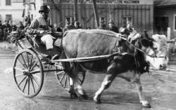 Fasching in Raab historisch Bild_24